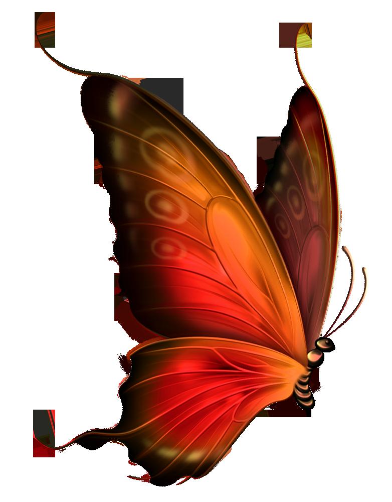 png格式的蝴蝶