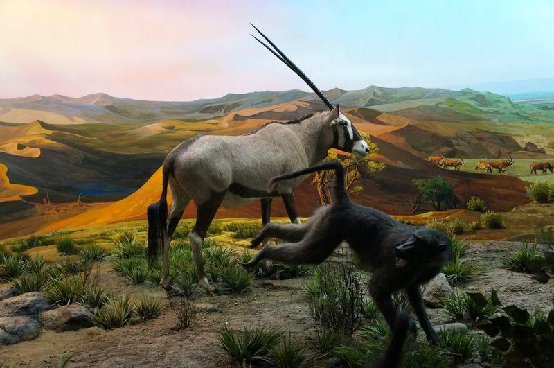 【原创】荒野的呼唤:非洲动物